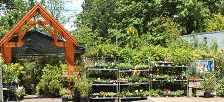 Fox Hollow Creek Nursery 833 W 28th Ave In Eugene At The Corner Of